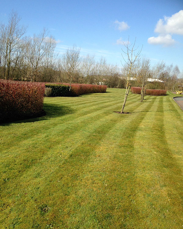 Nortnern Landscapes - Grounds Maintenance