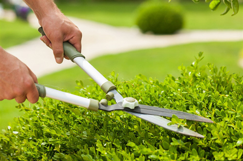 Garden Maintenance in Ashley